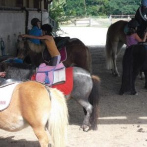 section-sport-etude-equestre-nantes-blain-ecurie-pascal-leroy-bapteme-poneys-min