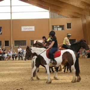 section-sport-etude-equestre-nantes-blain-ecurie-pascal-leroy-dsc06876-min
