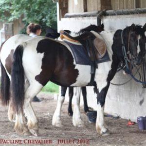 section-sport-etude-equestre-nantes-blain-ecurie-pascal-leroy-img_4978-copie-min