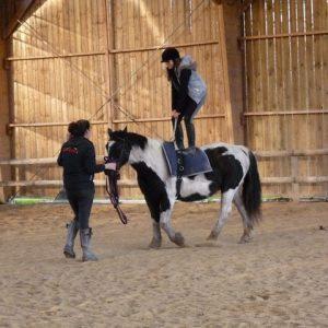 section-sport-etude-equestre-nantes-blain-ecurie-pascal-leroy-voltige-min
