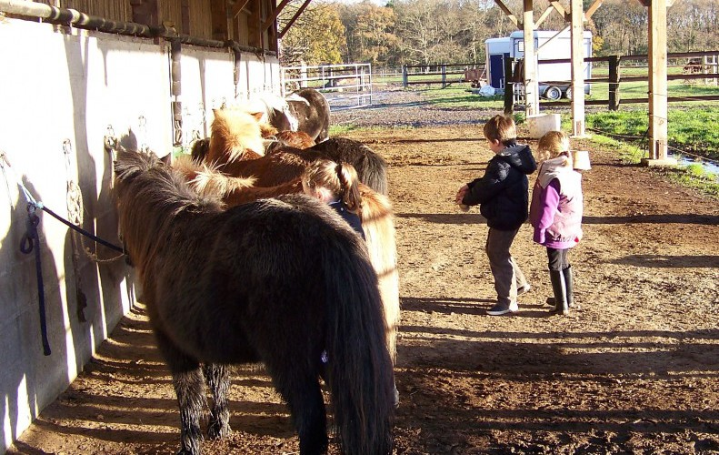 Cours-baby-poney-5