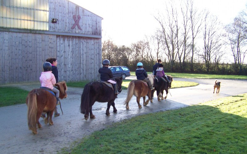 Cours-baby-poney-7-800x512