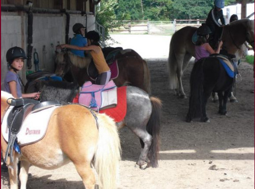bapteme poneys