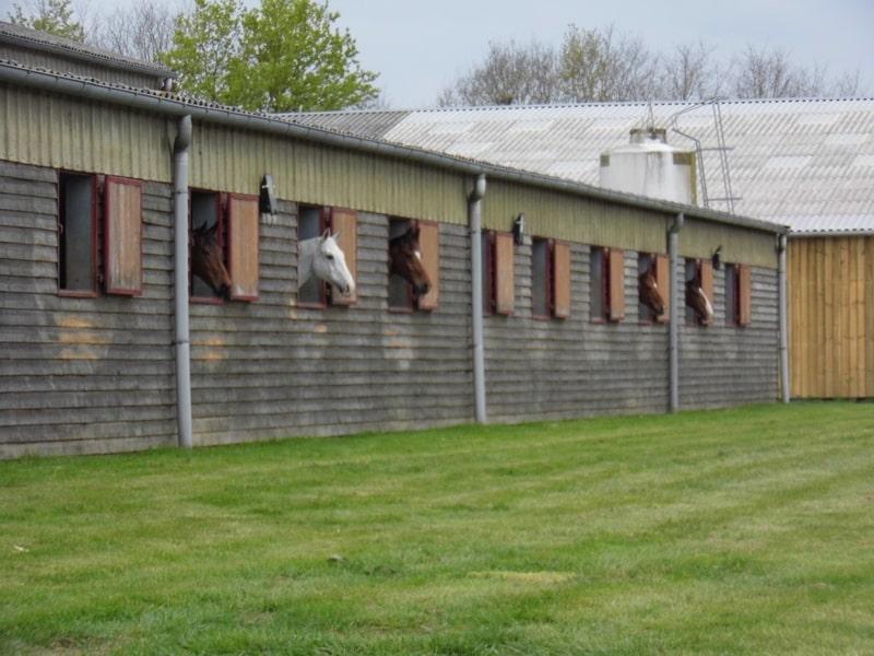 Section Sport Études Équitation